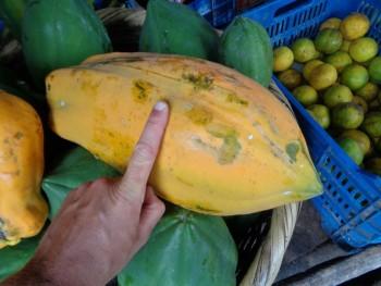 travel reise nicaragua papaya