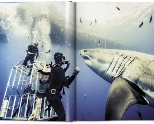 haie - auge in auge mit den gefährdeten räubern der meere start